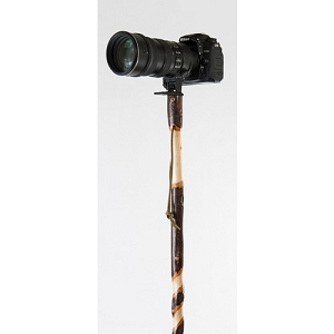 Sweet Gum Photographer's Walking Stick
